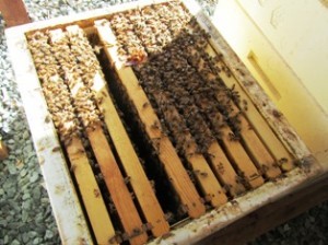 A super with nine of ten frames that the bees will fill with honey
