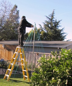 Carlos balances on a ladder to work on the wire tree