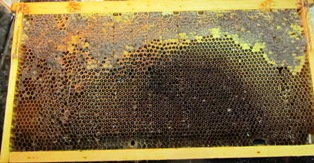 Honey is sealed in a honeycomb on a frame that fits into a super