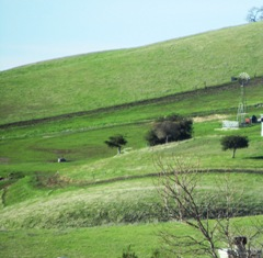 Concord's hills turn emerald green with the recent rains