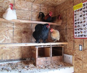 This chicken house has egg access doors, a human door, a window, and is insulated