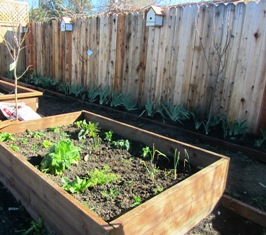 Amendments are easy to work into the soil in raised beds