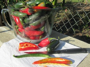 Chili peppers contain oil that irritates skin and eyes