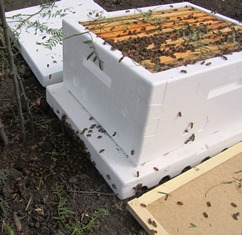 Hive with frames and bees