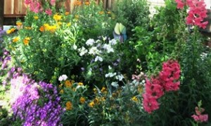 What flowers are growing in your garden that you could use in your culinary endeavors?