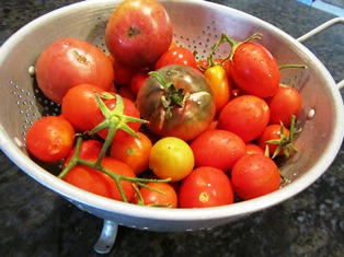 Some of our heirloom tomatoes produced lots of tasty fruit, but others didn't