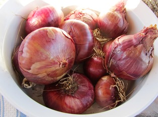 Red onions grown from sets laid onto the dirt and barely covered with soil produced bountifully this yearprinkled with