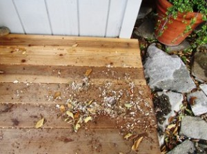 Shavings of wood, foam, and nesting materials characterize the mess on the porch