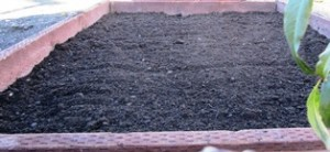 The soil with fertilizer added should ensure a healthy start to the iris