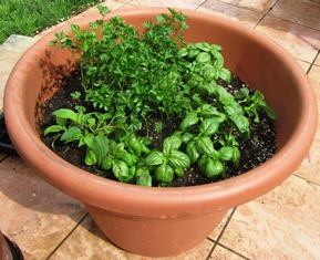 Herbs in a pot for use in the kitchen