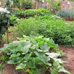 A healthy garden visually delights