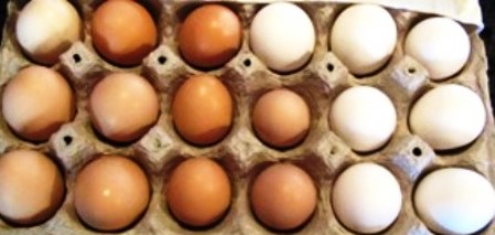 Assortment of organic eggs from free-ranging,heritage laying hens