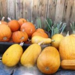 Harvested pumpkins and heirloom butternut squash symbolize the arrival of autumn