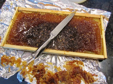 A knife is used to uncap wax cells to allow honey to flow from the frame
