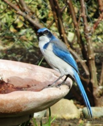 A flash of blue signifies a jay in the yard.