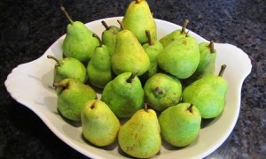 Bartlett summer pears