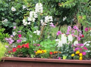 It's easy to grow a variety of annuals or perennials in a raised box
