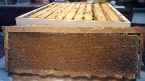 "The hive box ""super"" with ten frames of honey awaits separating and straining into buckets"