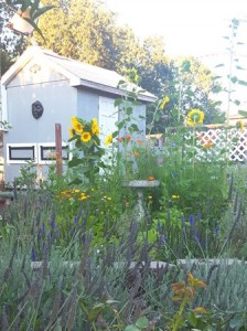 Lavender and sunflowers are beloved by bees
